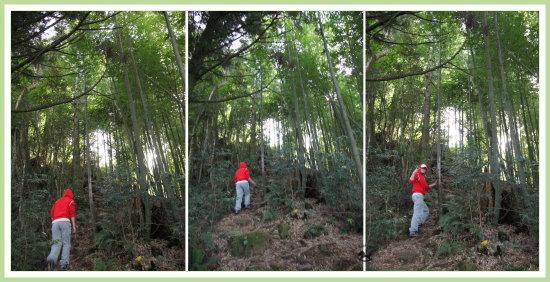 忘憂森林探路 17.jpg
