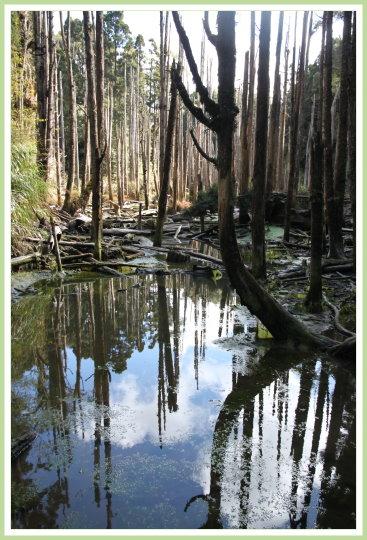 忘憂森林探路 31.jpg