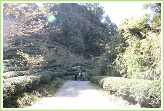 忘憂森林探路 42.jpg