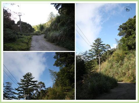 忘憂森林探路 43.jpg