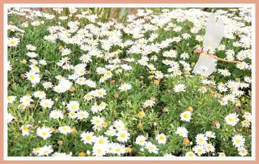 花博美術園區 1.jpg