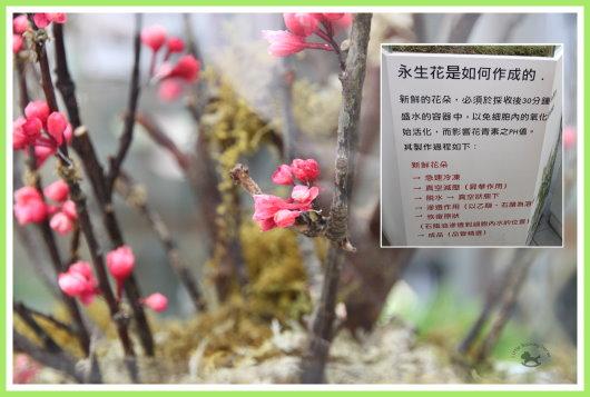 花博(未來館) 5.jpg