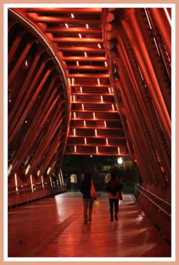 花博花之隧道(夜) 2.jpg