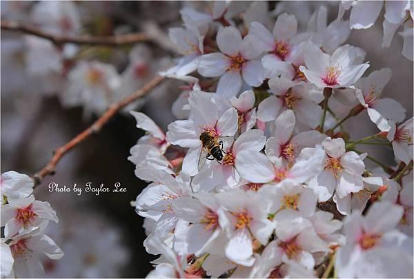 熊谷櫻堤10