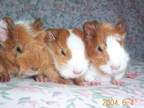 我們是3兄弟