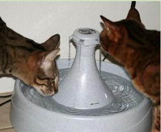 drinkwell_cat.jpg