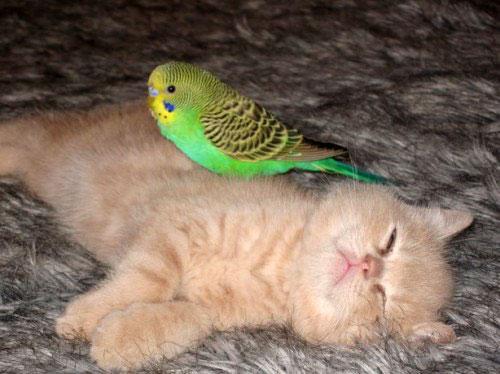 catbird06.jpg
