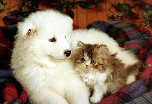 CAT-DOG.jpg