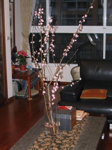 客廳桃花盛開滿枝芽
