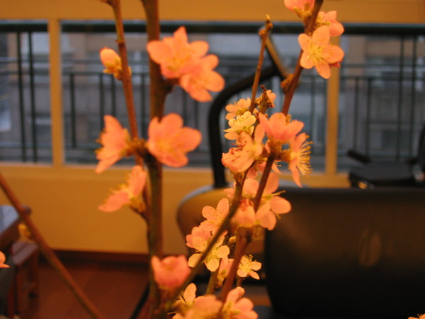 桃花滿嬌美的粉紅花瓣