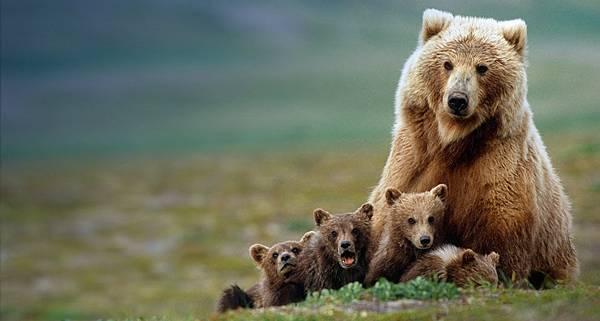GrizzlyMom阿拉斯加熊母子.jpg