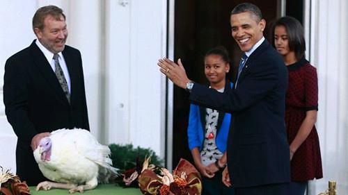 2011 感恩節歐巴馬赦免火雞4