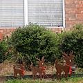 還有小麋鹿也列隊在歡迎聖誕節呢.