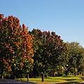 天高氣爽,朗朗晴日,深秋氣候一夜轉涼,一冷早晚只有攝氏5度,甚至0度了呢.