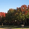 深秋的德州達拉斯,綠樹翻紅,色彩繽紛,天清氣朗,煞是美麗.