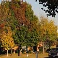 深秋的樹,美麗樹影之四.斑斕多姿.