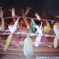 彩色玉米與南瓜,最標準的感恩節裝置.