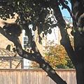 樹上有松鼠,我忍不住出來和松鼠Say Hello.