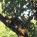 看到沒?陽光穿過樹葉,松鼠在樹幹上與我對看呢.