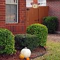 感恩節Thanks Giving Day到了,11/22我們看看鄰居也照樣有過節裝置喔.