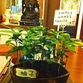 20130628-3.辦公桌上原來的盆栽