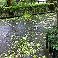 20130713-1.颱風來了,住家瓏山林社區巷道落葉枝條處處。