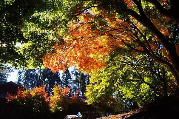 福壽山秋景