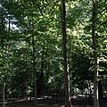 公園裡綠樹如蔭