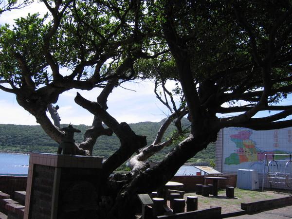 老榕樹植於日據時代大正11年1922年,是與學校同齡的耆老。
