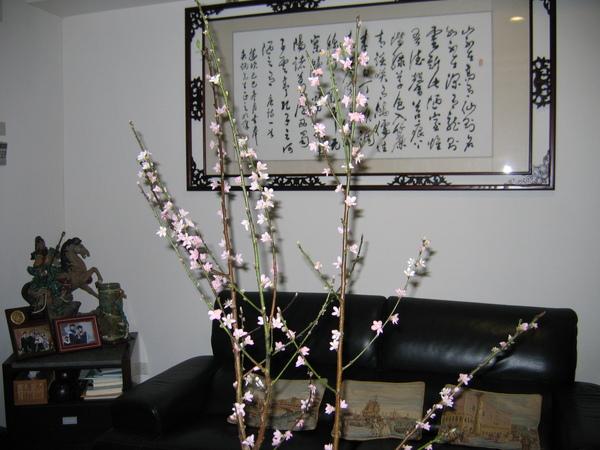 桃花舞春風,滿枝桃花添年味兒。08/01