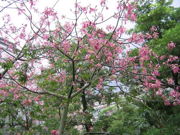 數大便是美,颱風未來之前花葉都還健在,那時更美麗。