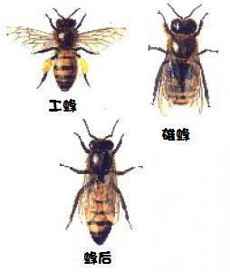 les-abeilles-64615_qis