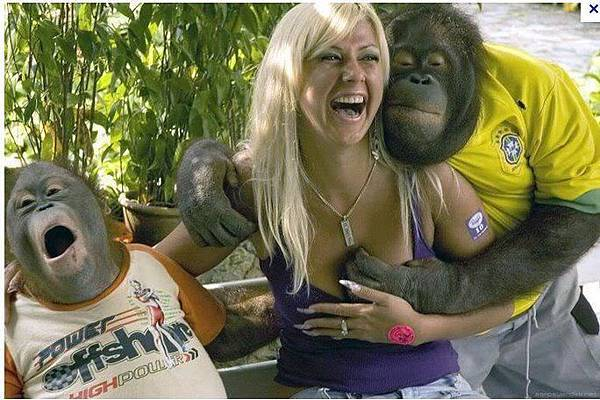 macaco atrevido.jpg