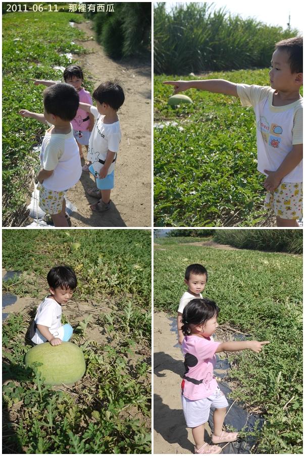 2y8m好望角蕃薯園14.jpg