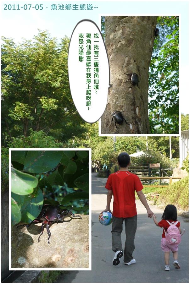 2y8m魚池鄉獨角仙.jpg