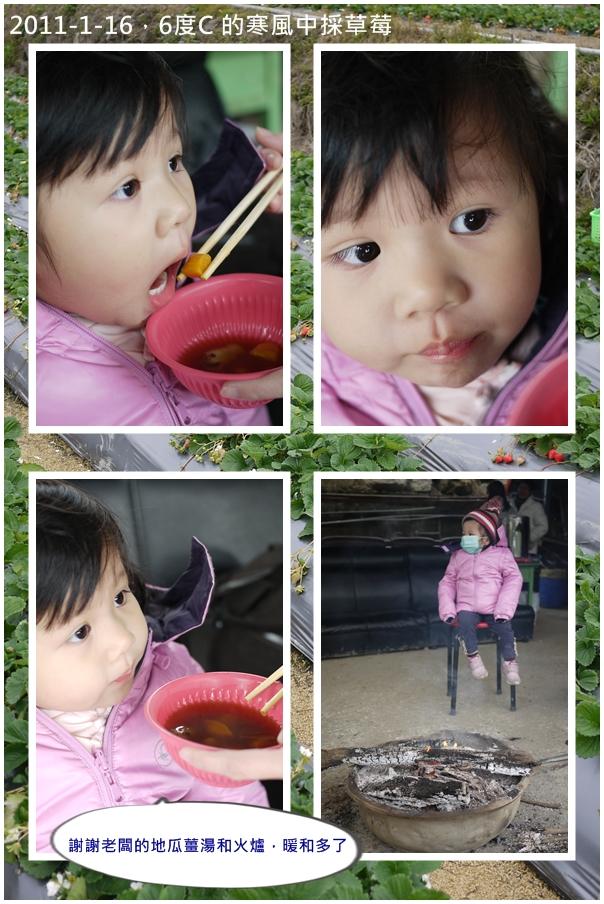 2y4m新社採草莓2.jpg