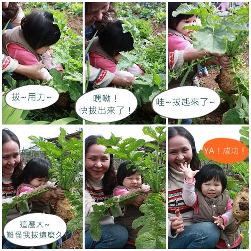 1y4m拔蘿蔔1.jpg
