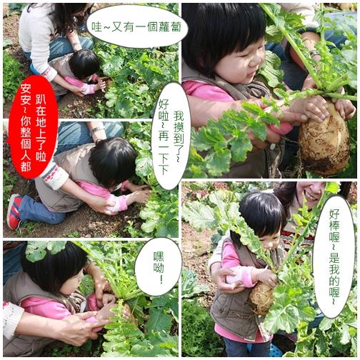1y4m拔蘿蔔2.jpg
