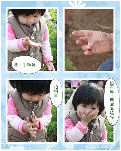 1y4m拔蘿蔔4.jpg