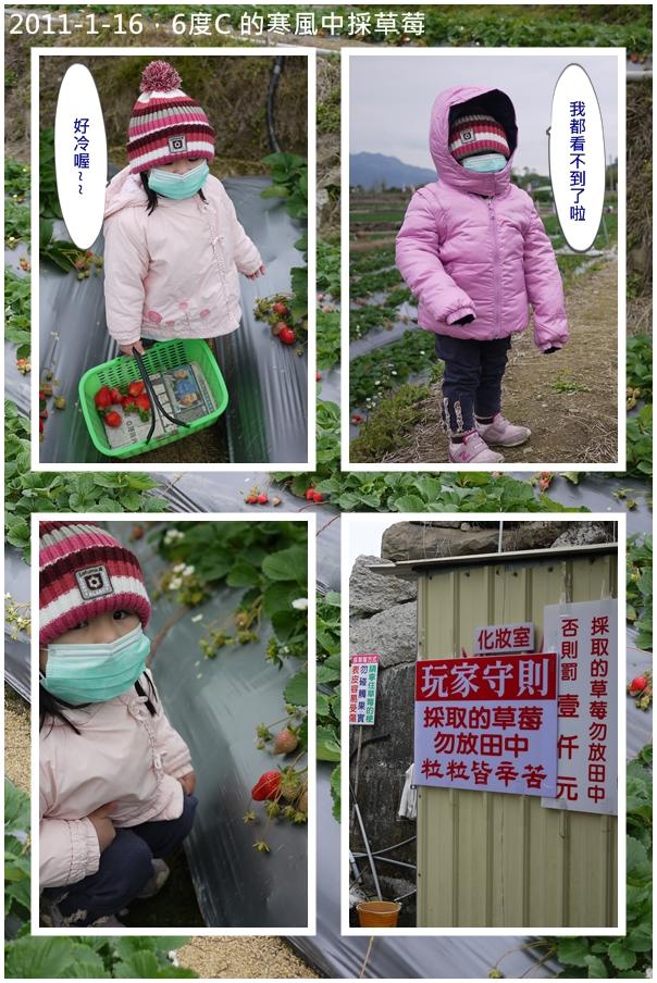 2y4m新社採草莓1.jpg