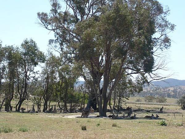Tidbinbilla Nature Reserve 2