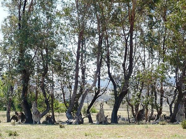 Tidbinbilla Nature Reserve 5