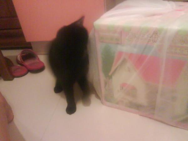 他很愛玩塑膠袋!