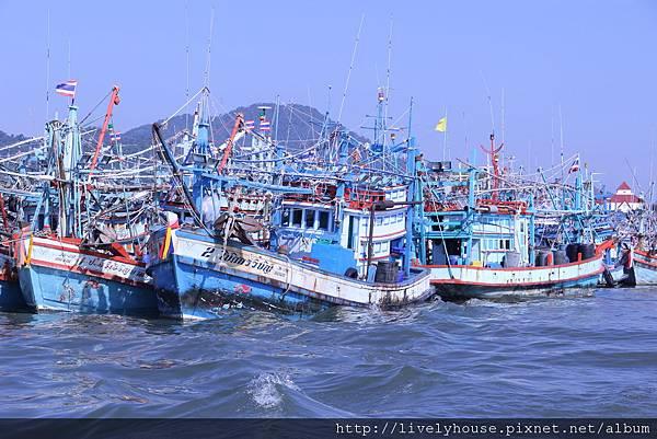 有好多漁船.JPG