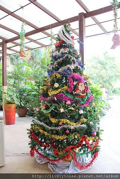旅館外圍有一顆好大的聖誕樹.JPG
