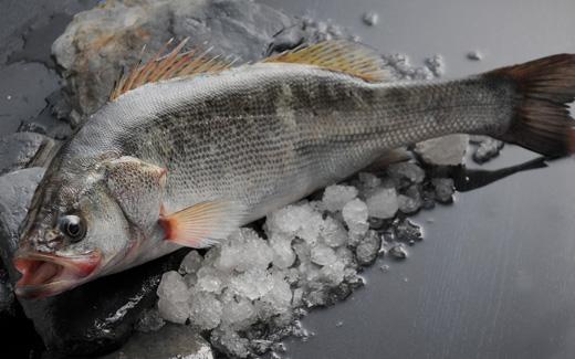 鱸魚2.jpg