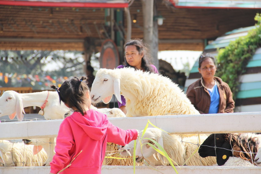 Swiss Sheep Farm Hua Hin