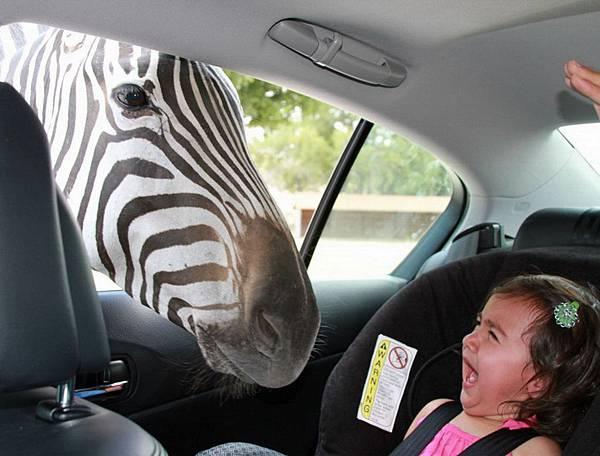 08-awkward-safari-park
