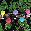 紅蓮花水上市場_180902_0063.jpg