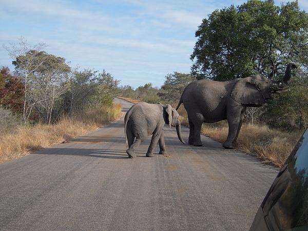 小象也跟著媽媽走了…